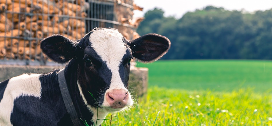 88-hand-picked-dairy-farm-name-ideas-you-can-use